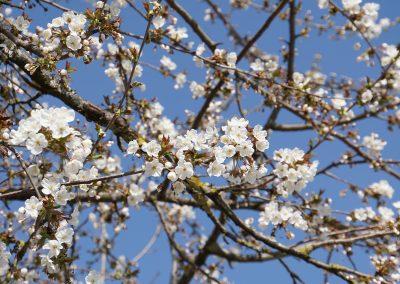 Freudentaler Frühlingserwachen